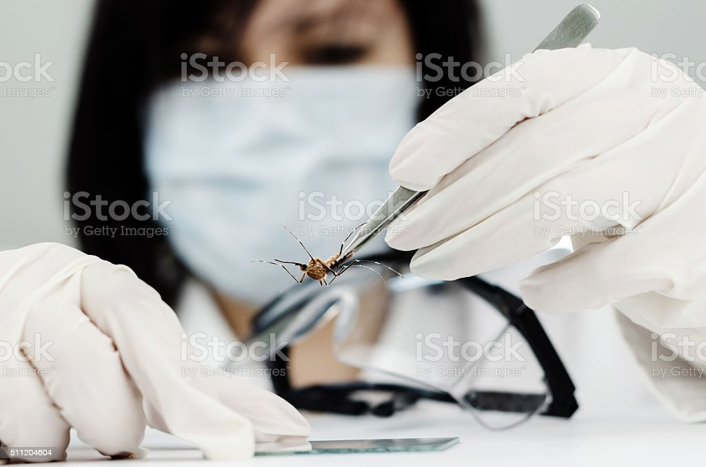 Doctor with mask planted viruses on the glass plate stock photo