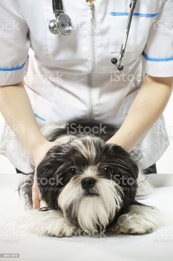 Doctor with puppy royalty-free stock photo