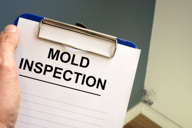 Documents about mold inspection with clipboard. Documents about mold inspection with clipboard. fungal mold stock pictures, royalty-free photos & images