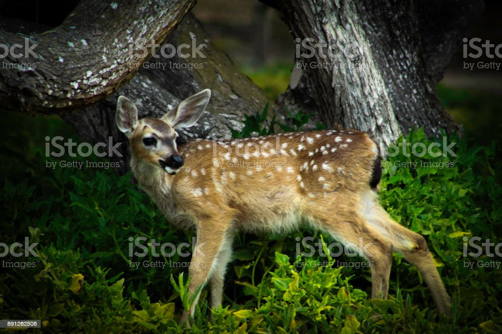 doe stock photo