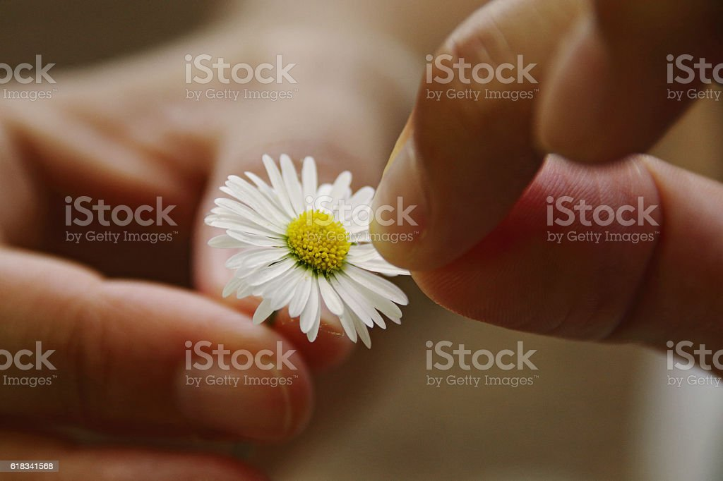 ¿Does he love me? stock photo