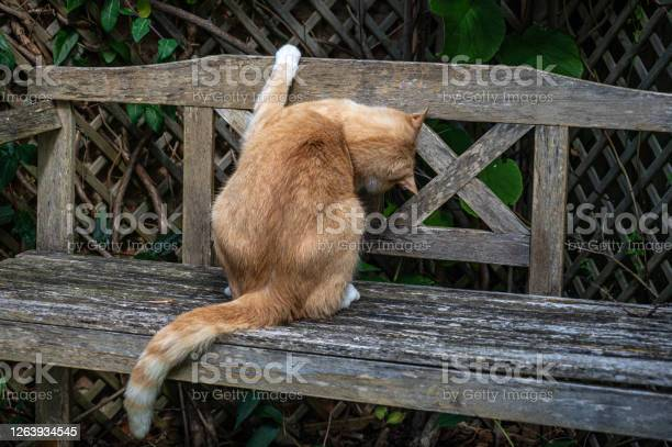 Does my bum look big playful cat with head under wooden bench picture id1263934545?b=1&k=6&m=1263934545&s=612x612&h=aw2nyio3elafy3dp2oje kroizsurqqwx4tahvon1rk=