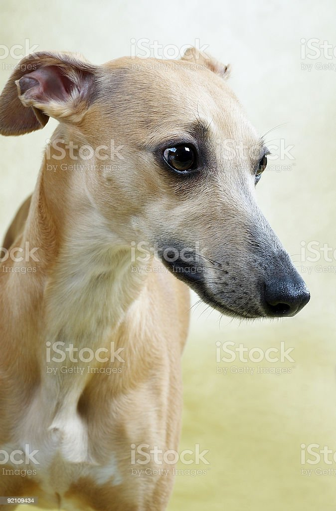 dog 9 royalty-free stock photo