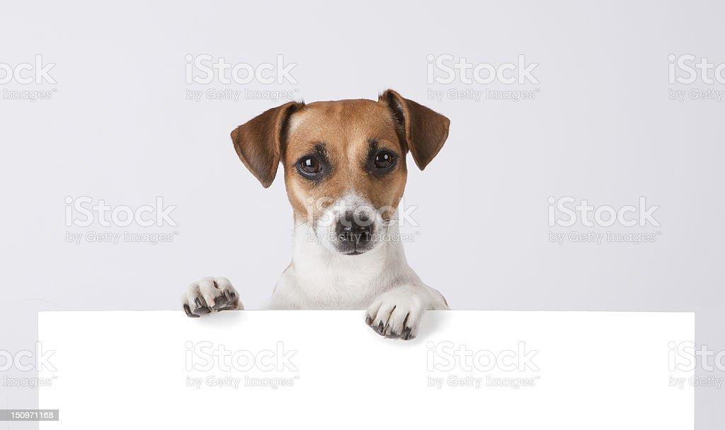 Dog above banner. stock photo
