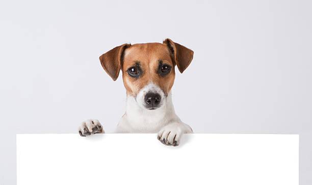 hund über banner. - peeping tom stock-fotos und bilder