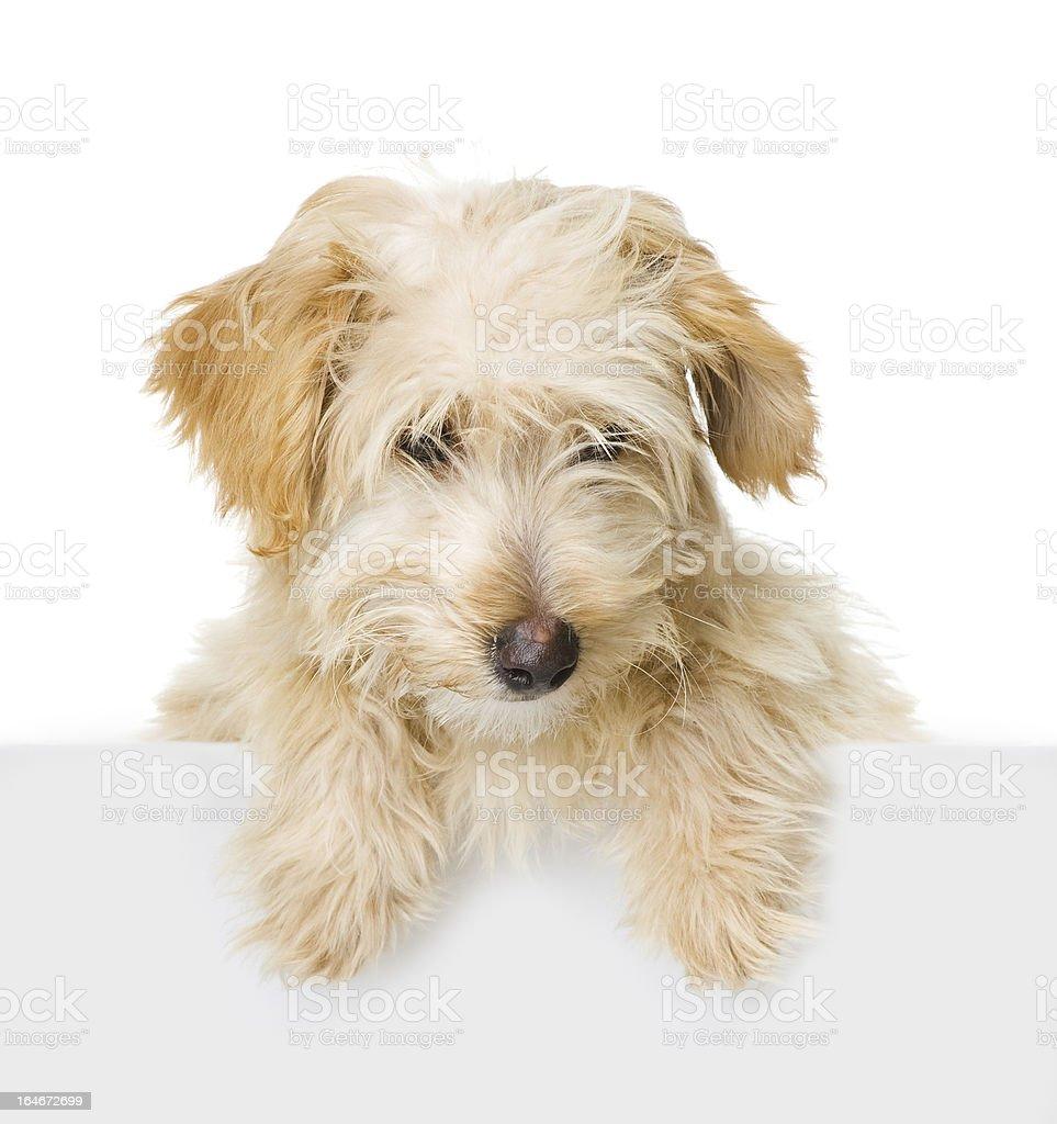 Dog above white banner stock photo