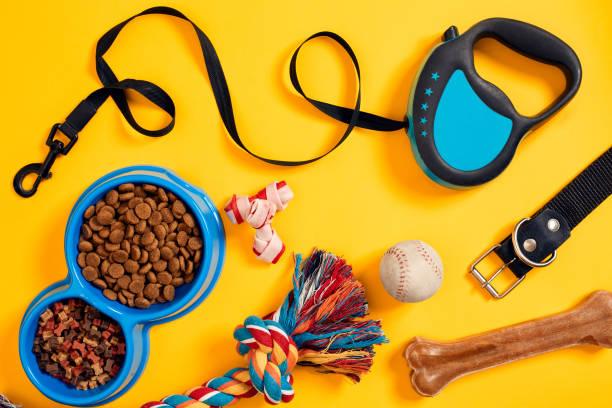 Accessoires pour chiens sur fond jaune. Vue de dessus. Animaux et animaux de concept - Photo