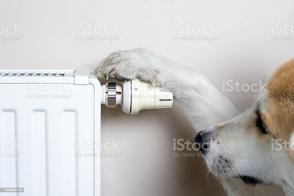 Hund anpassen Komfort Temperatur auf Heizkörper – Foto
