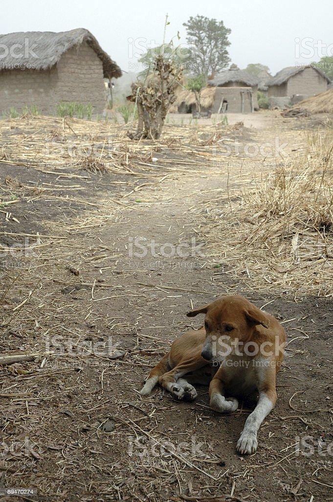 Dog - Africa royalty-free stock photo