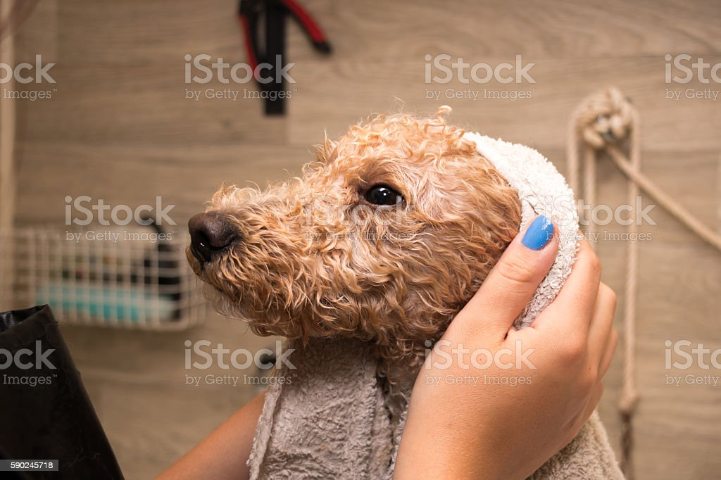 Dog after a bath stock photo