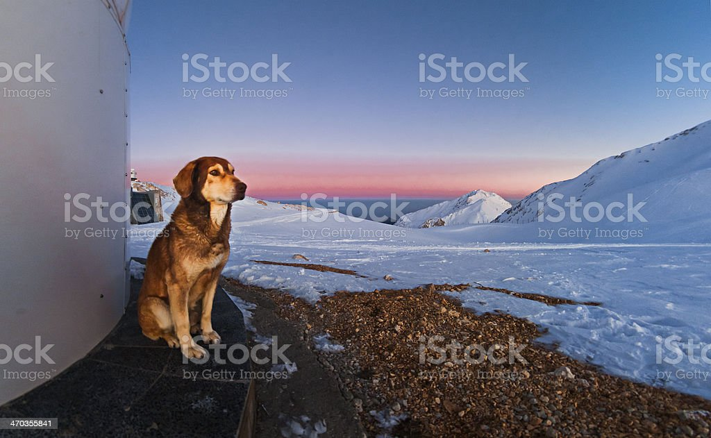 A dog standing at sunset while Earth\'s shadow and the belt of venus...