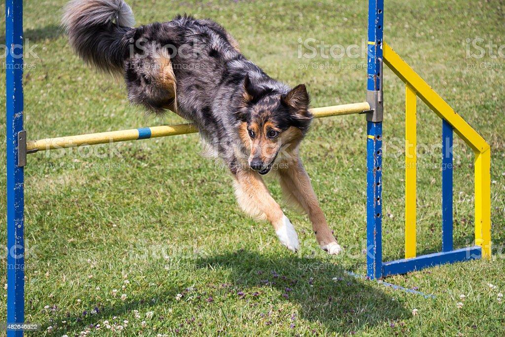Hund Beweglichkeit jumping – Foto