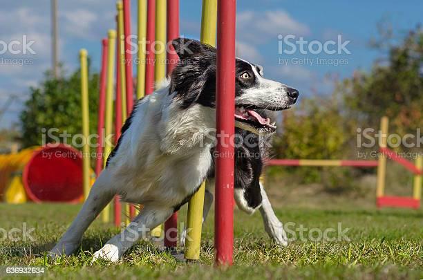 Dog agility slalom picture id636932634?b=1&k=6&m=636932634&s=612x612&h=myshgg2mscluq4fwpk05m3nljdjgswkfcc9zd1on2dm=