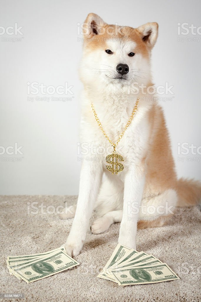 dog akita inu dealer stock photo