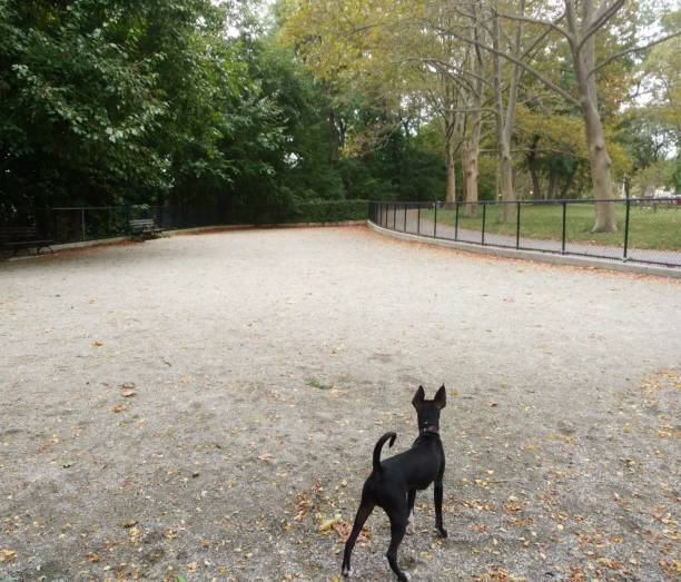 Dog Alone in Dog Park stock photo