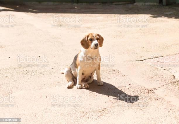 Dog alone picture id1169588010?b=1&k=6&m=1169588010&s=612x612&h=if4nq  gkibbzp  3b6pd t5 mupmygdmspjsphcl7m=