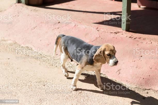 Dog alone picture id1169588506?b=1&k=6&m=1169588506&s=612x612&h=ji4besgluzw6z4scuhxmgymwc9bbzyn tdpu jlu5qi=