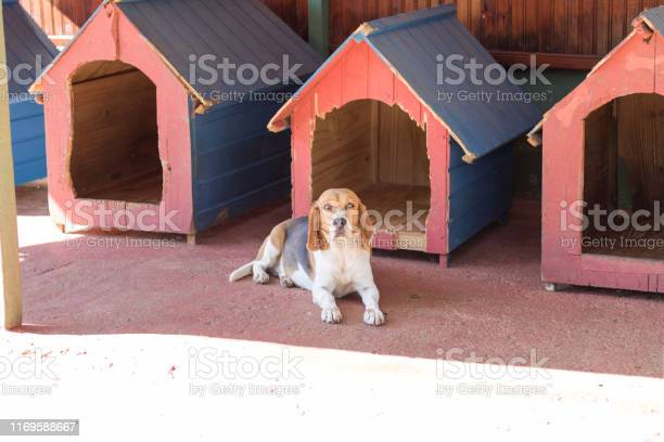 Dog alone picture id1169588667?b=1&k=6&m=1169588667&s=612x612&h=czozeehlfmon5qtx0e 0jwrk2z1tbot5aqdjdav0ixa=
