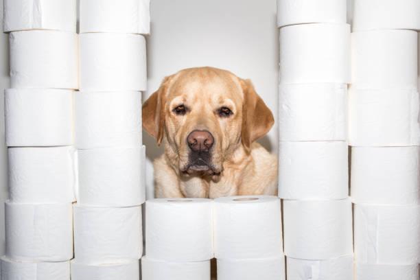 A dog among hygienic pape