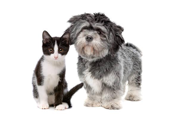 Dog an cat picture id1058509244?b=1&k=6&m=1058509244&s=612x612&w=0&h=j6hc9 nobx xk11itceb1egrpzsfodvghmugkjdzfyo=