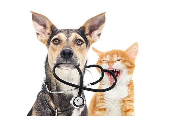 dog and a cat and a stethoscope – Foto
