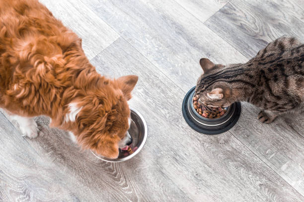 dog and a cat are eating together from a bowl of food. animal feeding concept - dog stock pictures, royalty-free photos & images
