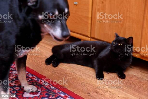 Dog and a cat are immemorial enemies when their paths join them a picture id900217208?b=1&k=6&m=900217208&s=612x612&h=yab0qdmyugkm3qlq5lmkxyfe7jilxbv5uwcmcbdtvvu=