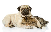 the dog and cat lie together. isolated on white background
