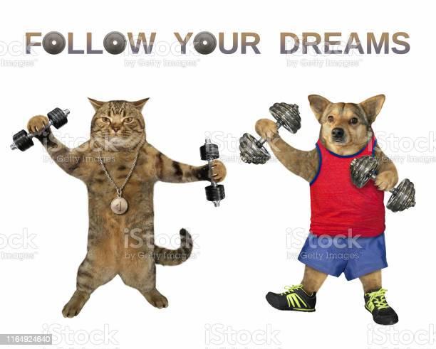 Dog and a cat lift dumbbells picture id1164924640?b=1&k=6&m=1164924640&s=612x612&h=lswyzv1ctrajth sml 6mro5ldfjhsry4ju hmnaxfs=