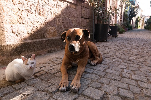 A dog and a cat sit in the Ayvalik old streets, in Turkey