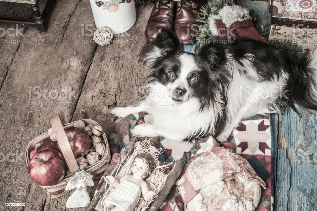 Dog And Baby Jesus Christmas Card Stock Photo Download Image Now Istock