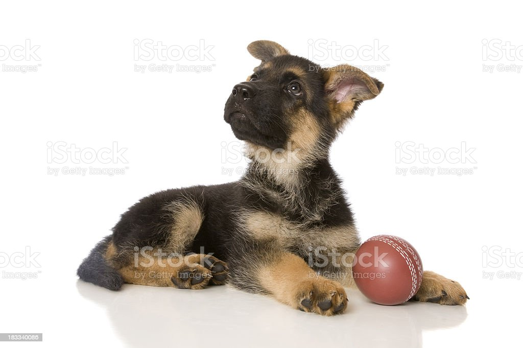 Hund UND Ball – Foto