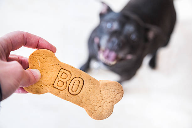 Dog and biscuit stock photo