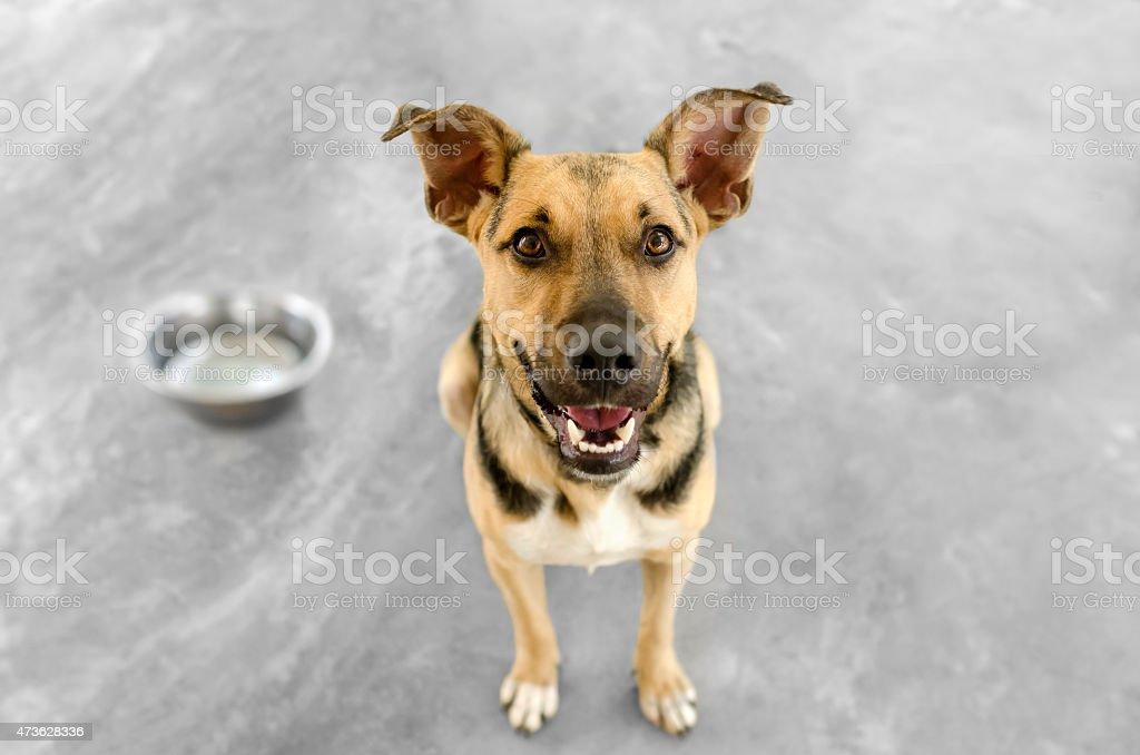 Dog and Bowl – Foto