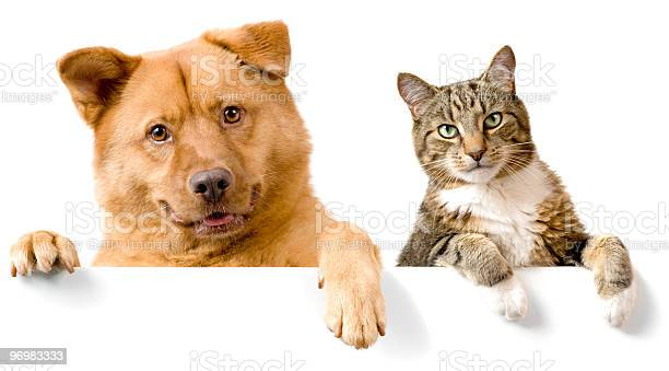 Dog and cat above white banner picture id96983333?b=1&k=6&m=96983333&s=612x612&h=j0pkrg2 hjyznhe93dre9ujg7jfxr6fb5bjh3vxom24=