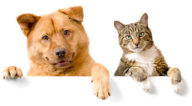 Dog and Cat above white banner stock photo