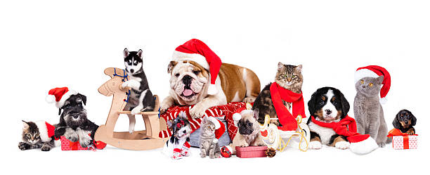 dog and cat and kitens wearing a santa hat - katze weihnachten stock-fotos und bilder