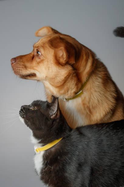 Dog and cat are playing on white background picture id1014834958?b=1&k=6&m=1014834958&s=612x612&w=0&h=ikinp5bnijke2x5ehufpfptkhbld5g4zwijy ehelcu=