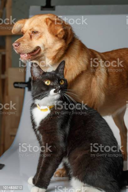 Dog and cat are playing on white background picture id1014835212?b=1&k=6&m=1014835212&s=612x612&h=ztxmry9eqbnasyovnx5xjj9yzxfbzvrwjelaz9oj4u4=