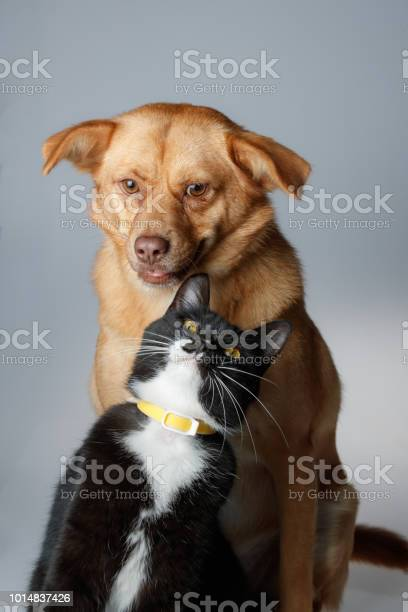 Dog and cat are playing on white background picture id1014837426?b=1&k=6&m=1014837426&s=612x612&h=0ikmv0tf13mkjgxlpzkm63naxe5ntxggrgzdepfqdeg=