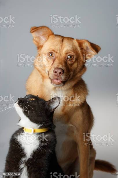 Dog and cat are playing on white background picture id1014837434?b=1&k=6&m=1014837434&s=612x612&h=ncfiu7dr66fhc6nb12zxkfvgsc8zhlwa2hlhof8qkau=