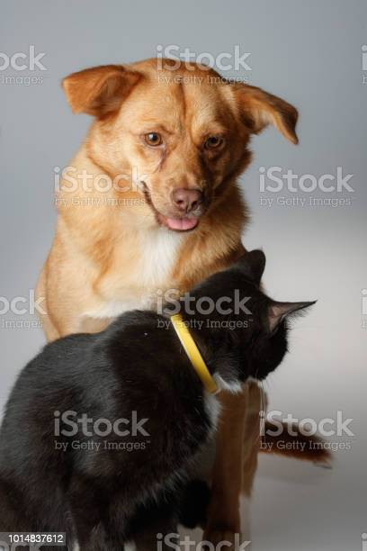 Dog and cat are playing on white background picture id1014837612?b=1&k=6&m=1014837612&s=612x612&h=abthe pqwrnxscp5fdb0thyedhd1 idnqsx7m1xdvwk=