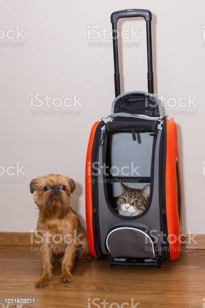 Dog and cat are ready for the ride picture id1211425211?b=1&k=6&m=1211425211&s=612x612&h=fuia om5fep1m opnfy zepqabn5yu1rmdku1hjjre4=
