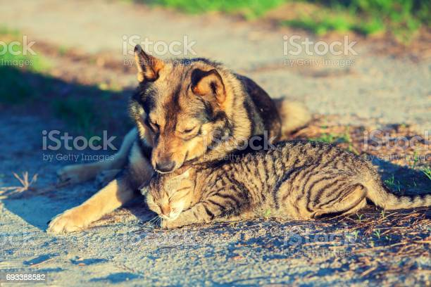Dog and cat best friends playing together outdoor cat and dog lie in picture id693388582?b=1&k=6&m=693388582&s=612x612&h=zzip1hsco0ncz ud3mqpb zvhylqd1 jxswbtkngbcu=