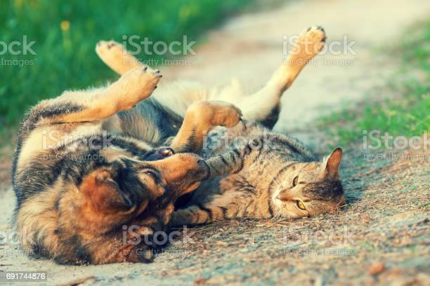 Dog and cat best friends playing together outdoor lying on the back picture id691744876?b=1&k=6&m=691744876&s=612x612&h=ryitbcvm vtkkvlmusmr1hhtt4y2av1urvidku ewki=