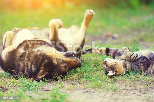 istock Dog and cat best friends playing together outdoor. Lying on the back on the grass. 856137194