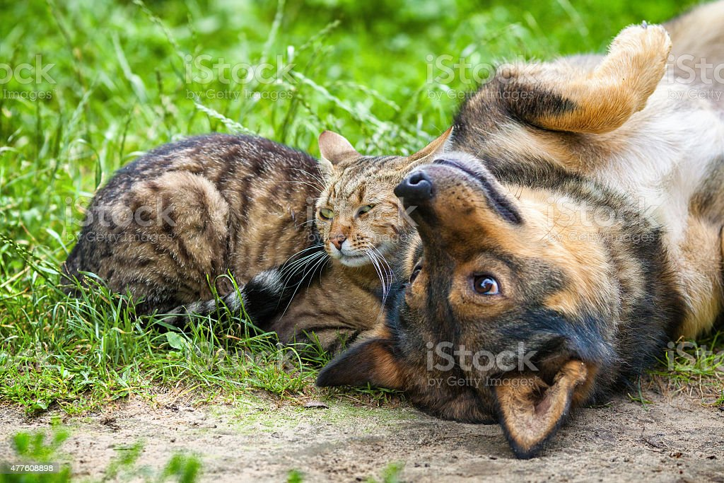 Dog and cat best friends playing together outdoor - Royalty-free 2015 Stock Photo