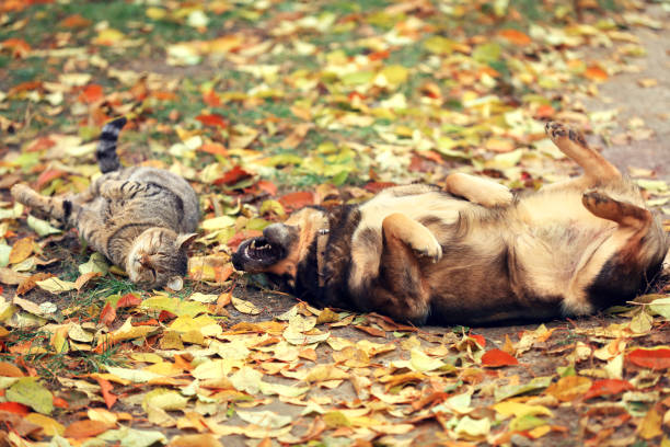 Dog and cat best friends playing together outdoor picture id646899746?b=1&k=6&m=646899746&s=612x612&w=0&h=jsleupamawums4gdqi7bybum efjvc1kegnjhe3dtbu=