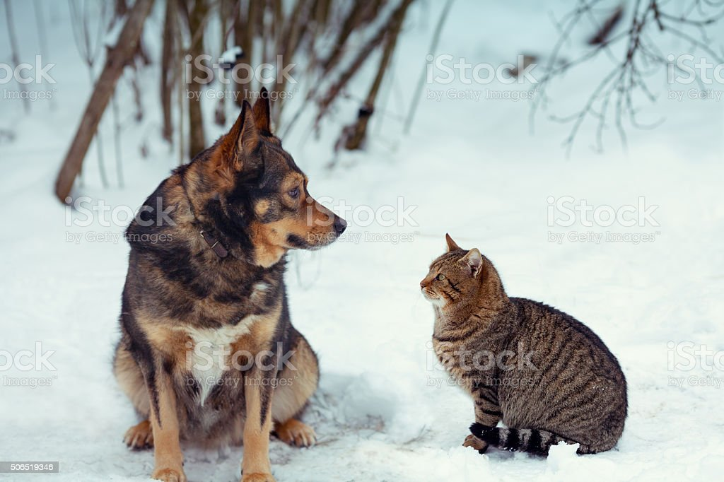 Dog and cat best friends sitting together in the snow stock photo