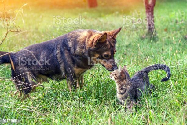 Dog and cat best friends walk in the grass in the garden in autumn picture id941719514?b=1&k=6&m=941719514&s=612x612&h=1nrbd0qj0uppp8xhewrtq2mg i5 7tex2o5ip8hdfga=
